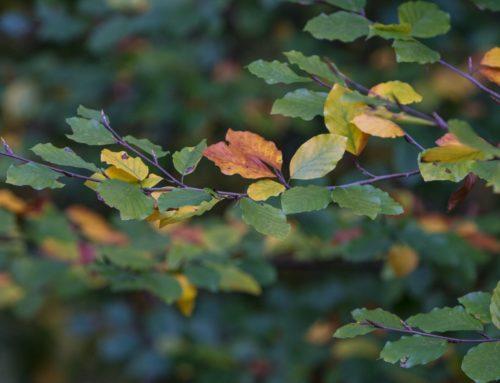 Herbstblatt II
