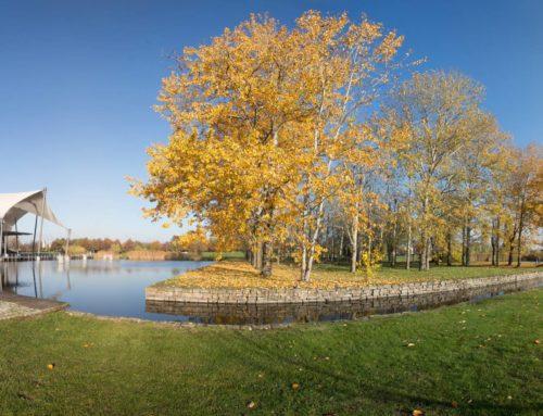 Magdeburger Elbauenpark im November 2016  (360°)