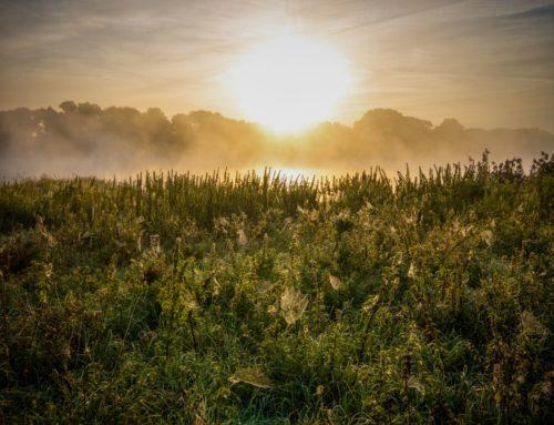 Natur am Morgen auf den Elbwiesen