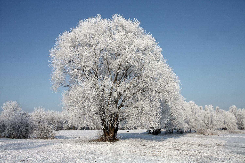 Winterlandschaften Kostenlos