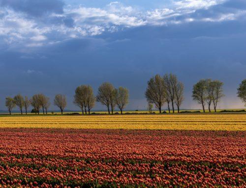 Im Land der Tulpen